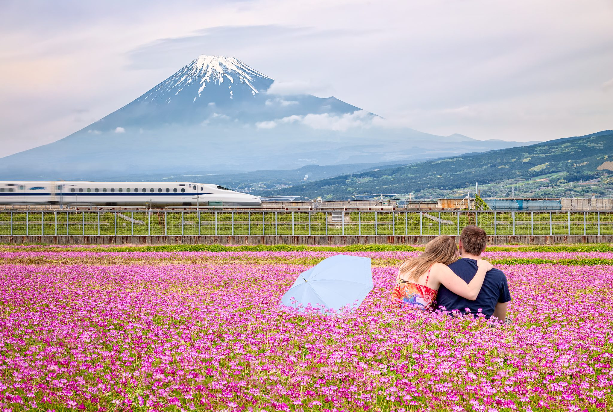 A perfect abstract of Japan. Shinkansen, beautiful flower fields and Fuji-san, the icon of Japan looking over it all.