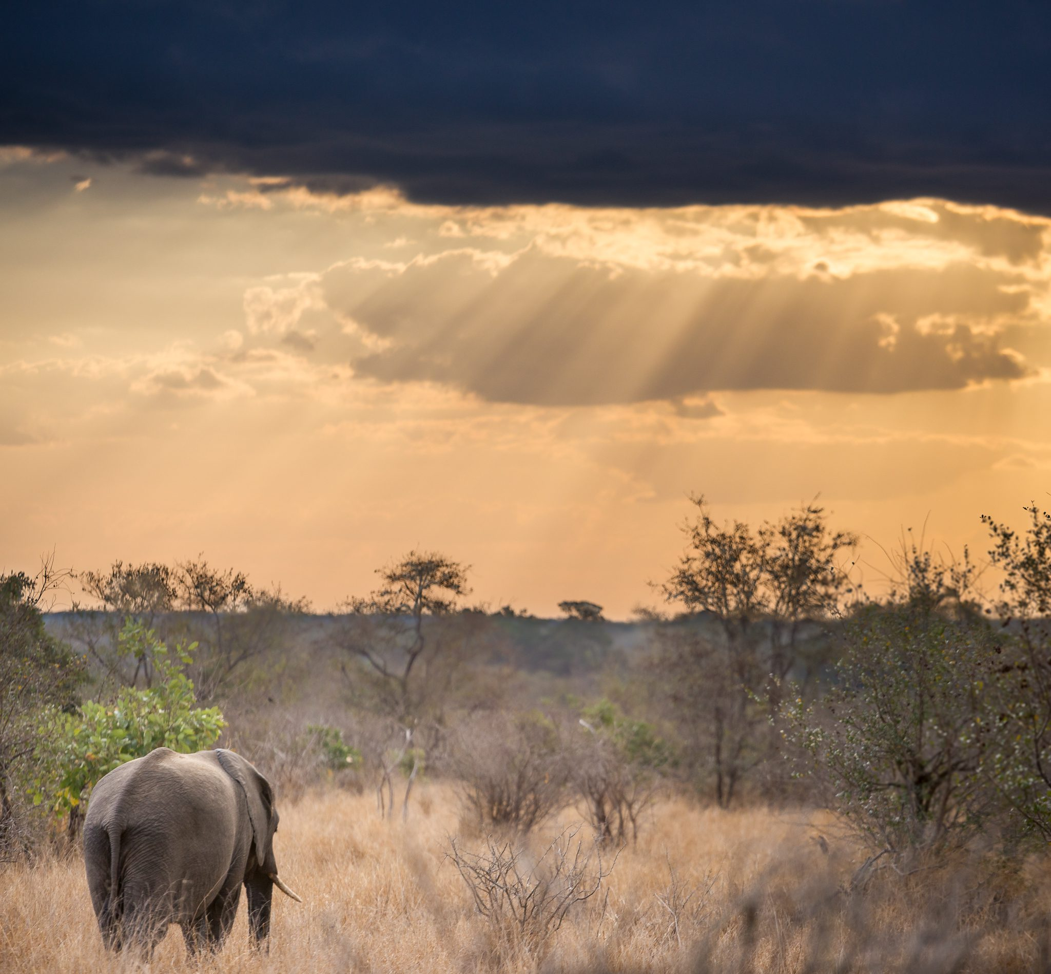 Does this view remind you of any movie/cartoon scene :)?!There are a lot of elephants in Kruger. Around 17.000. But moments like that, you just can't get enough of them!